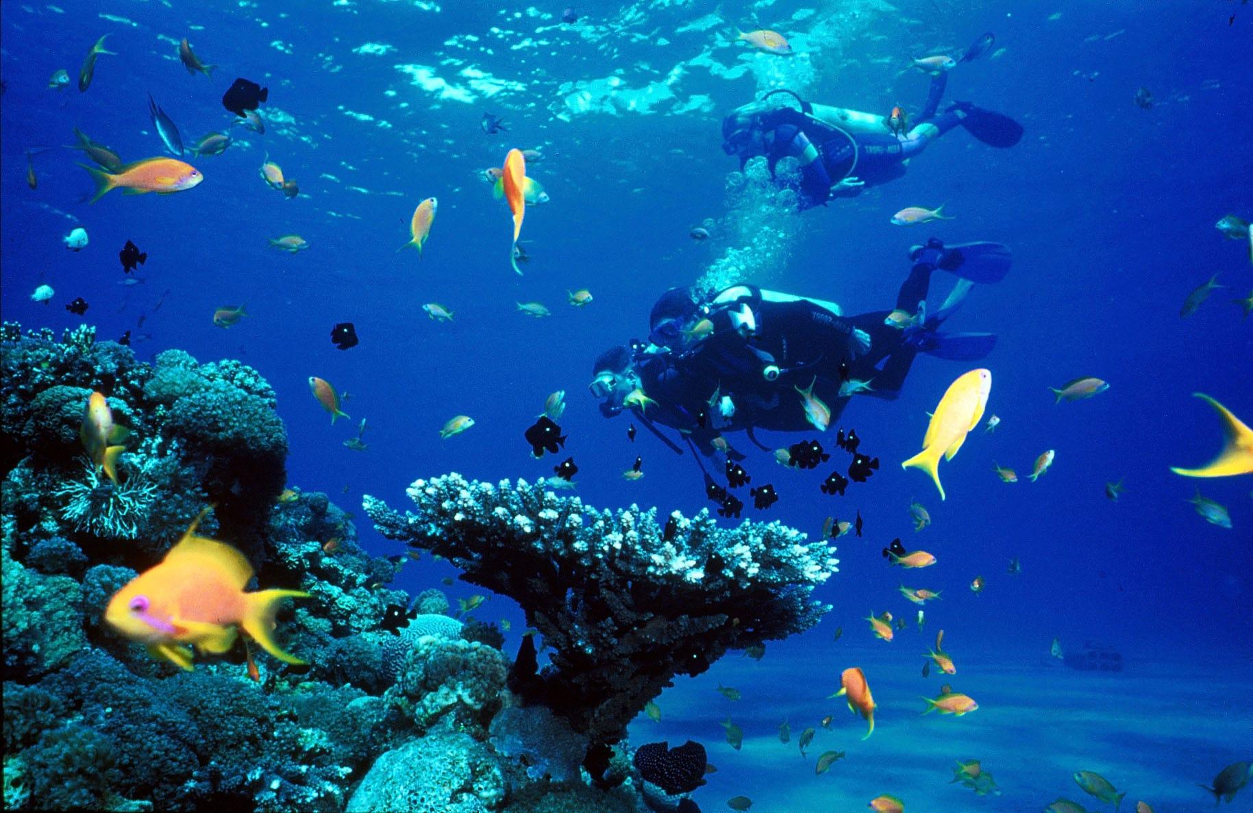 Scuba Diving - NHỮNG ĐIỀU NÊN LÀM KHI ĐẾN ĐẢO KOHRONG SAMLOEM