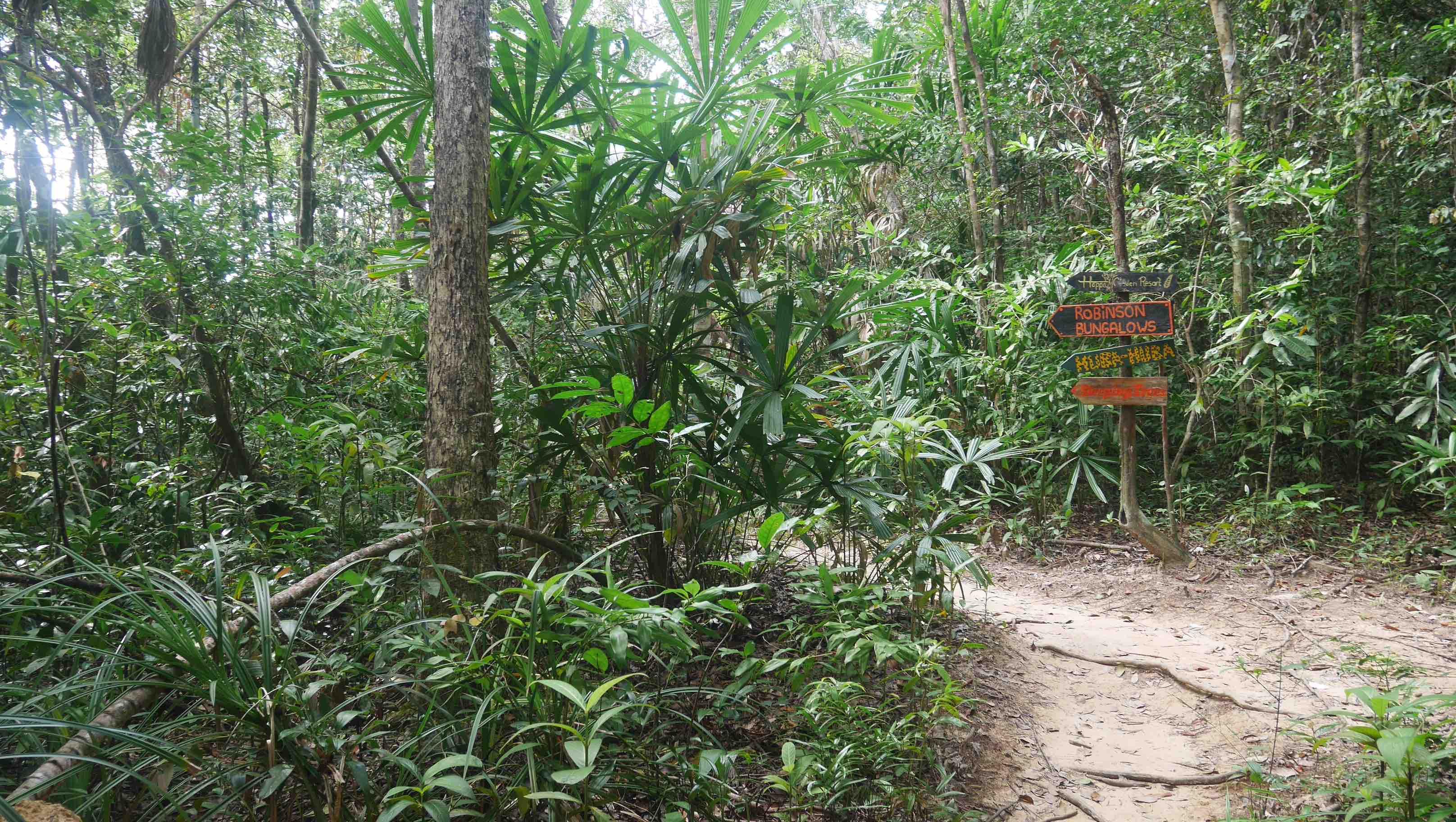 samloem2 - Những điều nên làm khi đến đảo kohrong sanloem